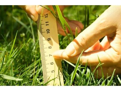 Как правильно ухаживать за газоном летом