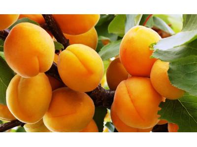 Как правильно ухаживать за плодовыми деревьями в саду