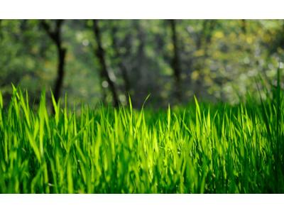 Триммер или газонокосилка - что выбрать?
