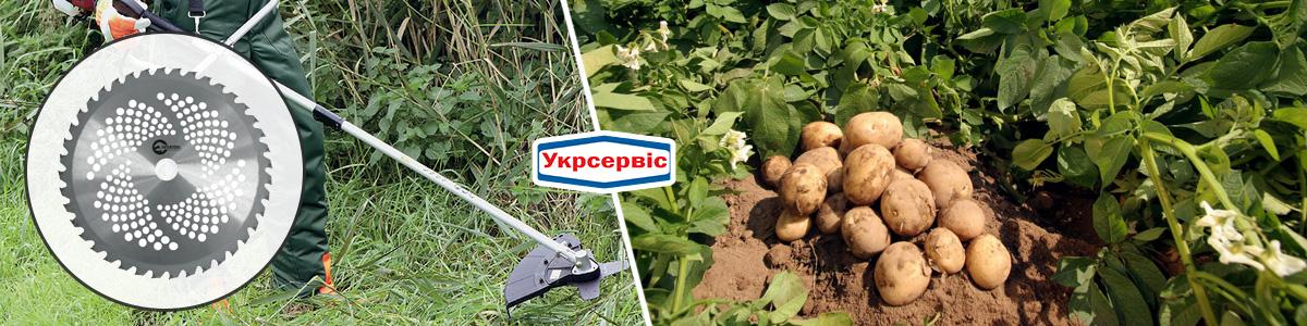 Как косить картофельную ботву мотокосой