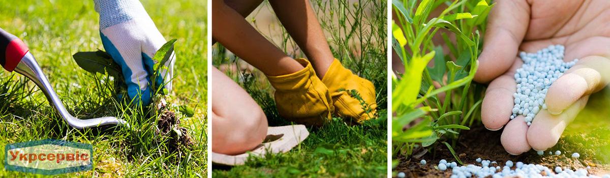 Не забывайте полоть сорняки на газоне