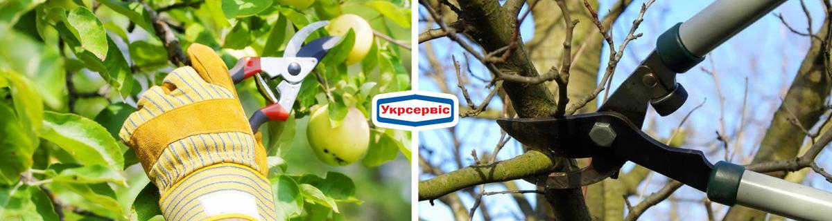 Как ухаживать за плодовыми деревьями – обрезание веток