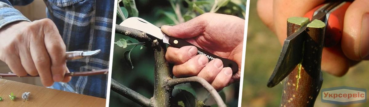 Топ-5 востребованных инструментов весной - садовые ножи