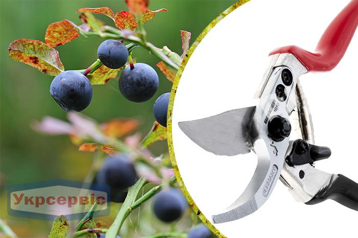 Купить недорогой секатор для обрезки растений BERGER 1010