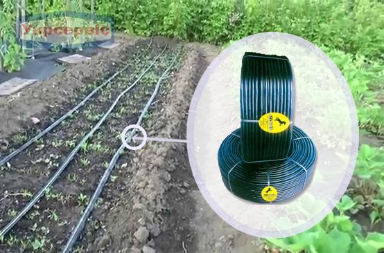 Применение капельного полива для огорода